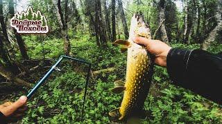 Рыбалка в тайге Щуки ломают спиннинги Часть 2