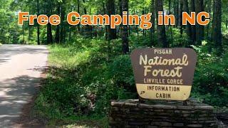 Free Camping in Noŗth Carolina at Old NC 105, Pisgah NF, NC