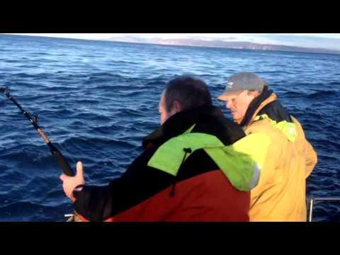 280lb Porbeagle Shark from the Pentland Firth Scotland