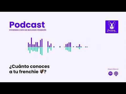 ¿Cuánto conoces a tu frenchie 🦇?