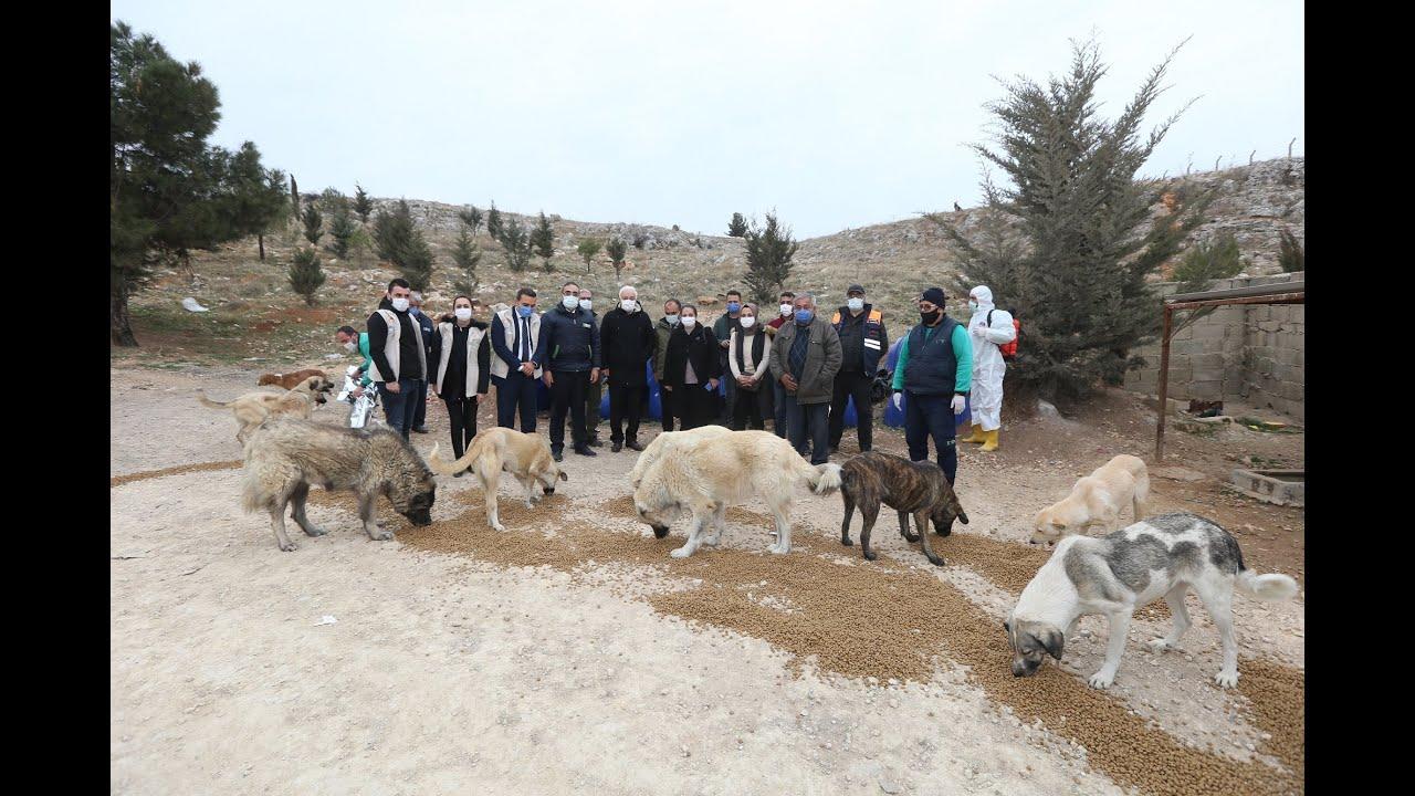 Sokak hayvanlarını besleyen Gaziantep ekibine Nihat Hatipoğlu'da katıldı