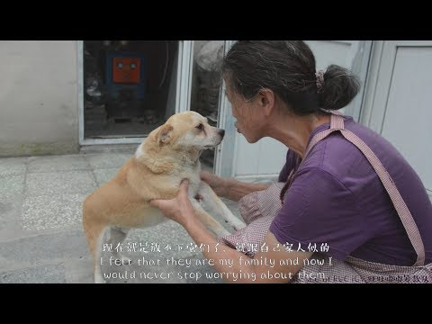 The story of an Animal Shelter, Wangwangdudu Homeland
