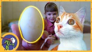 Эксперимент. Что будет, если опустить ЯЙЦО В УКСУС. Как сделать резиновое яйцо