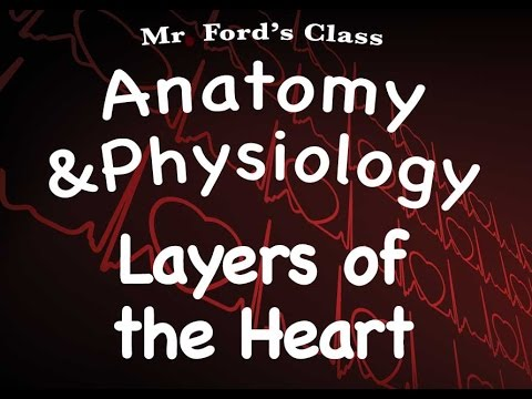 Cardiovascular System : Layers of the Heart (14:02)