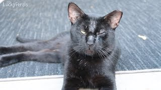 Boo Day 9 - What Happened To His Eye? - Training And Socializing A Feral Cat thumbnail