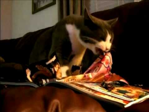 Tux the Cat Loves to Read AVN Magazine