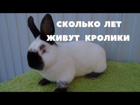 Вопрос: Сколько живут племенные кролики, через какое время их нужно менять?