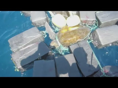 Shelling Drugs  Turtle gets tangled in cocaine bales
