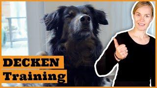 So entspannt dein Hund auf seiner Decke I Gestresster Hund bei Besuch I Hund verfolgt mich ständig