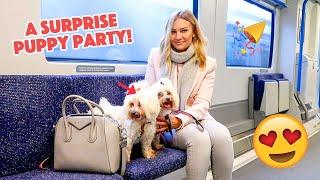 A SURPRISE PUPPY PARTY!!
