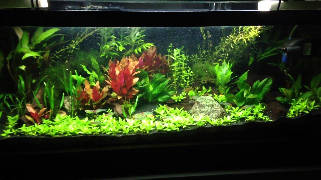 dirt planted tank underwater jungle youtube