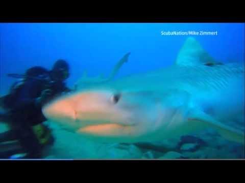Rare Look Inside a Shark's Mouth in Jupiter, Florida