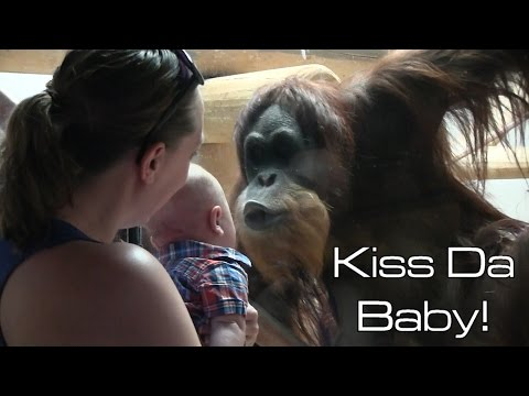 Morgen - Orangutan Wants to Kiss Dat Baby!
