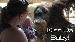 Orangutan Kisses Baby