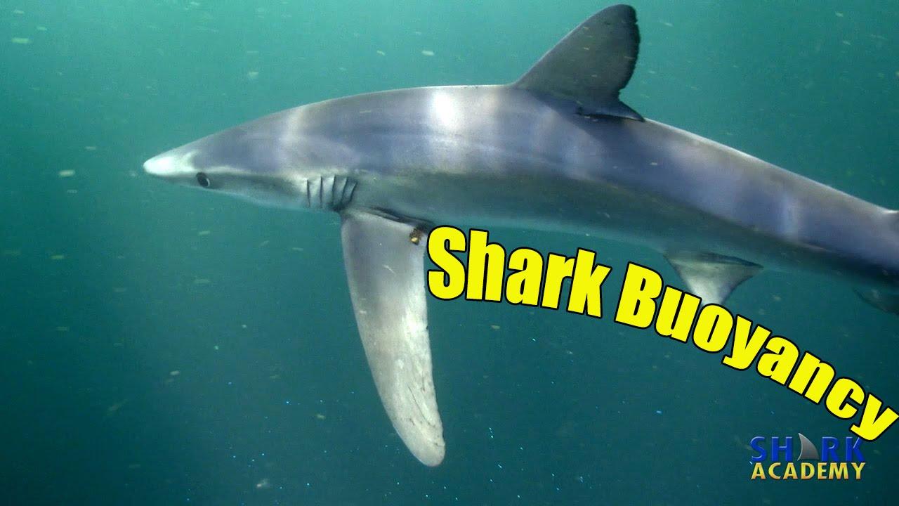 shark buoyancy shark academy youtube