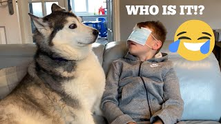 Will My Kids Spot The Difference Between Our Huskies Blindfolded Challenge!! [BEST REACTIONS EVERR!]