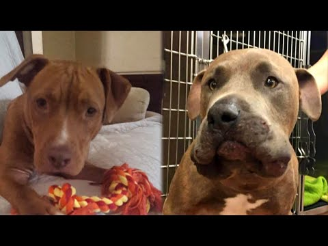 Dogs Save Woman's Grandchildren From Venomous Snake in Yard