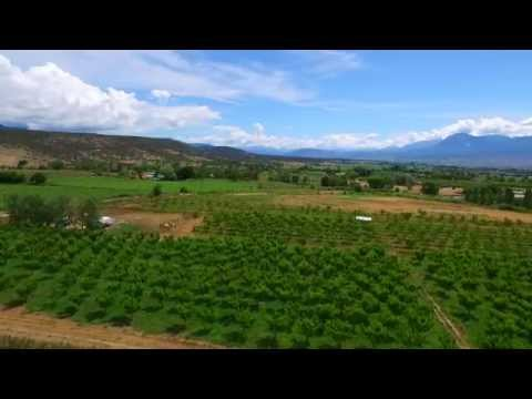 Colorado Organic Vineyard, Orchard & Winery