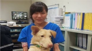 【衝撃】安楽死の薬を自分に注射した獣医…遺されたメッセージが辛すぎる! thumbnail