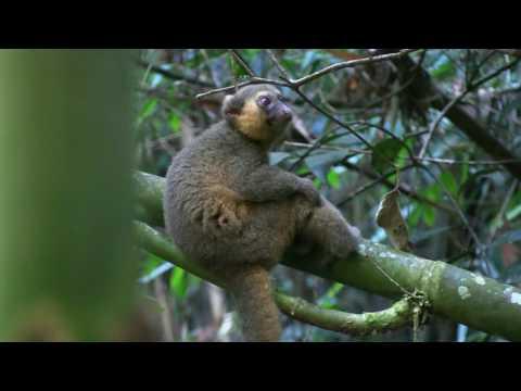 Madagaskar 2017. 25.febr.