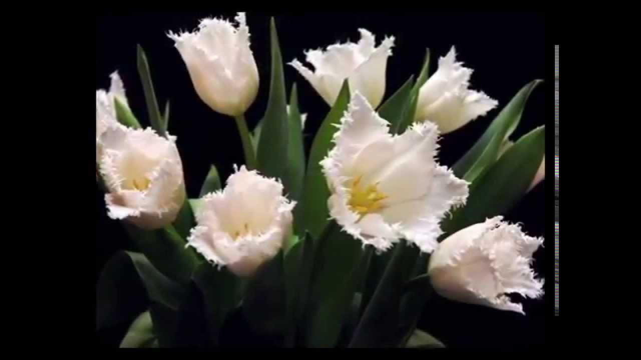 Ночные цветы и название 86