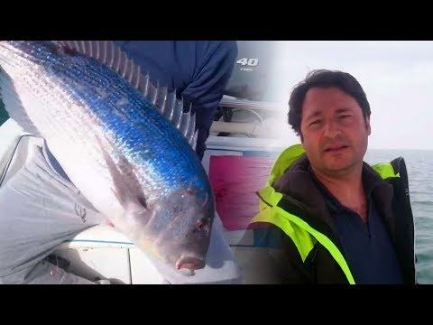 Traina con il vivo: Pesca Ladispoli catch and release dentice