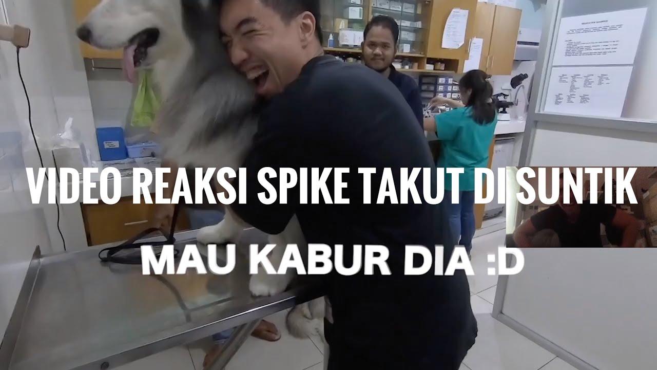 VIDEO REAKSI !!! Reaksi Ezron ntn Video SPIKE TAKUT DISUNTIK