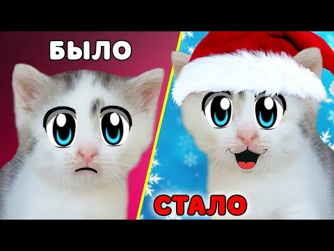 CAT MURKA without MOOD! DECORATE THE CHRISTMAS TREE FOR THE NEW YEAR! A LETTER to SANTA CLAUS and CH