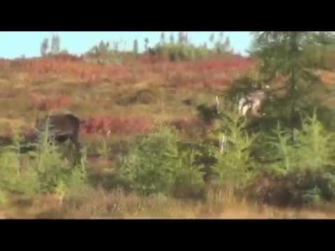 Nunavut Canada Caribou Hunt