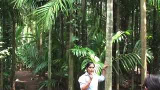 TROPICAL SPICE Plantation - In GOA 2014 Part 01