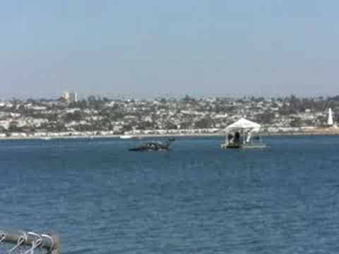 San Diego Bayfair IHBA Top Alky Flat