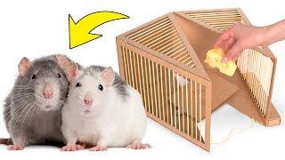 🧀🐀 Einfache Rattenfalle aus Karton DIY