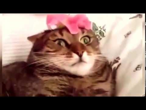 Reakcja Kota Na Kwiatek Youtube