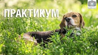 Практикум e29 - Как фотографировать собак