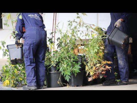 01.06.21 Skunklaboratorium afsløret i Sorø - Tre personer anholdt