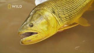 Wystarczyło zmienić technikę, żeby ryba złapała haczyk! [Z wędką na olbrzymy]