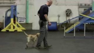 Ronya, Obedience Skills, High Ridge Mo, Winter 2009