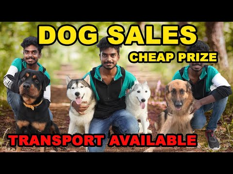 DOG FOR SALES | PUPPYS SALES | ALL BREEDS AVAILABLE | CASH ON DELIVERY | DOG LOVERS | LuckyMan