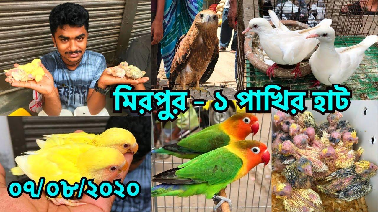 ঈদ পরবর্তী মিরপুর - ১ পাখির হাটের বাজার জানুন | পাখির দাম জানুন | Friday | Mirpur - 1 Haat (V - 125)