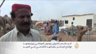 الباكستانيون يلونون المواشي لجذب الزبائن