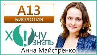 А13 по Биологии Демоверсия ГИА 2013 Видеоурок