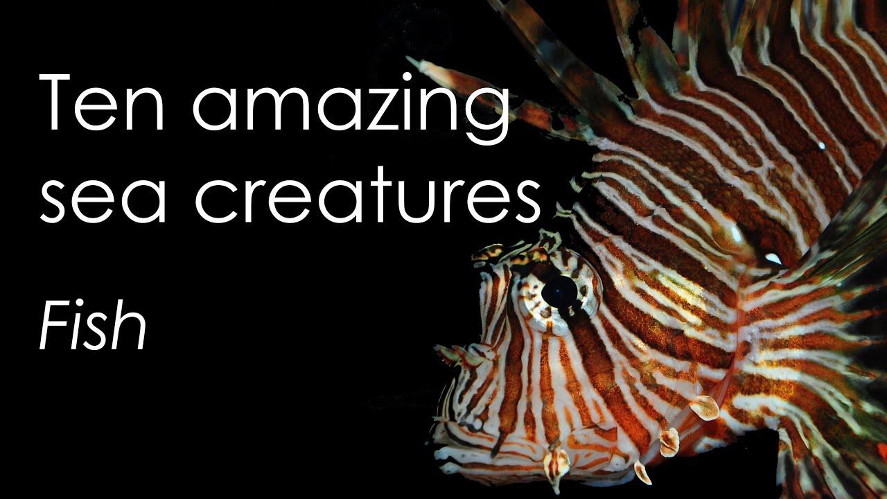 Ten amazing sea creatures - Fish