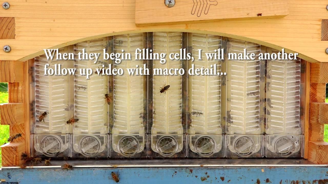 Flow Hive Update Honey...