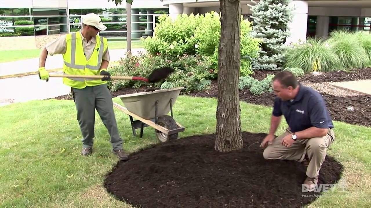 Effective Mulching Davey Tree