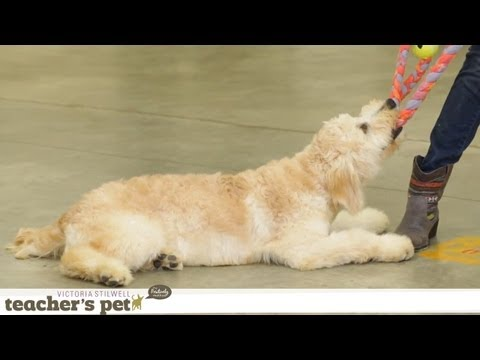 Teach Your Dog Proper Tug of War  Teacher's Pet With Victoria Stilwell