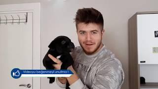 Bedava Rottweiler Yavrusu İsteyenler Bu Video'yu İzlesinler!!!