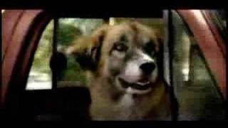 Tractor Supply Commercial With Border Collie Or Mcnab Dog.