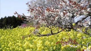 Sumi Shimamoto (Kyōko Otonashi) - Yokan (1986) [Maison Ikkoku episo...
