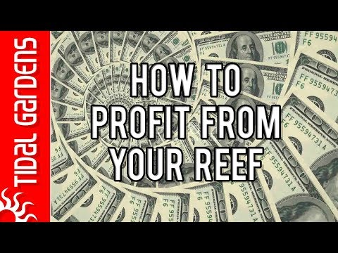 How to Make Money Off Your Reef Tank