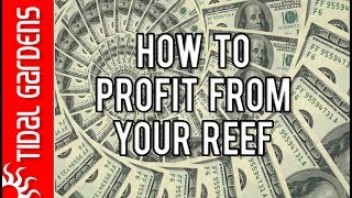 ... here are the top 5 ways to generate some money from your reef aquarium. hopefully one of these ideas will help you fund